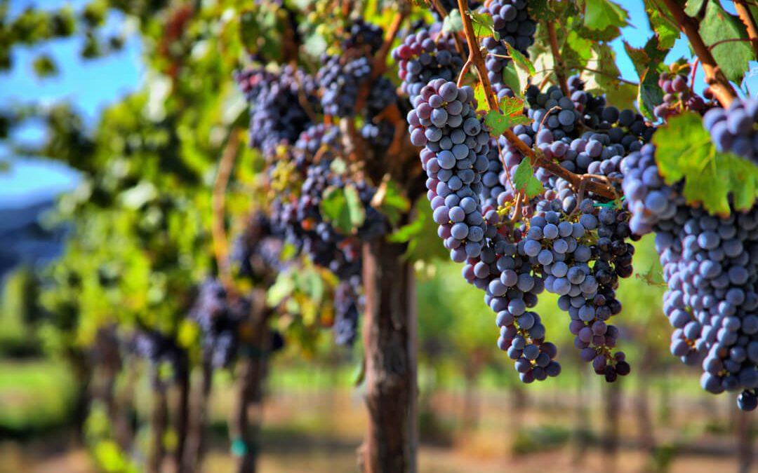 Winery Farm Tour